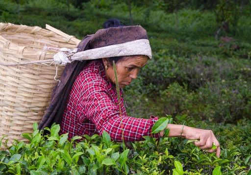 Ethical Tea Partnership on the International Women's Day